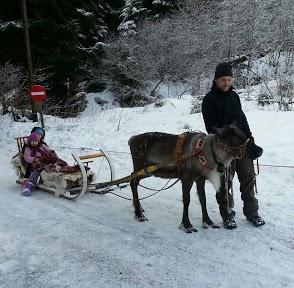 Tr:Notre séjour féerique parmi les rennes et les chiens de traineau...... - Page 2 20121248