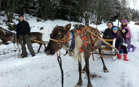 Tr:Notre séjour féerique parmi les rennes et les chiens de traineau...... - Page 2 20121249