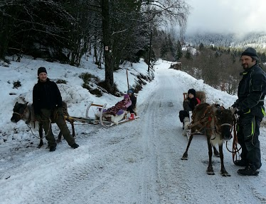Tr:Notre séjour féerique parmi les rennes et les chiens de traineau...... - Page 2 20121251