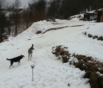 Tr:Notre séjour féerique parmi les rennes et les chiens de traineau...... - Page 2 Screen12