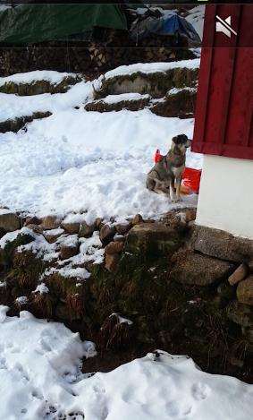 Tr:Notre séjour féerique parmi les rennes et les chiens de traineau...... - Page 2 Screen18