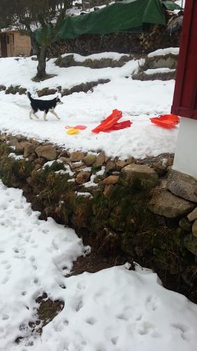 Tr:Notre séjour féerique parmi les rennes et les chiens de traineau...... - Page 2 Screen20