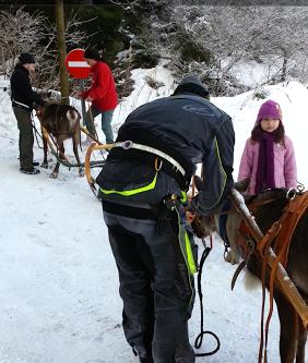 Tr:Notre séjour féerique parmi les rennes et les chiens de traineau...... - Page 2 Screen23