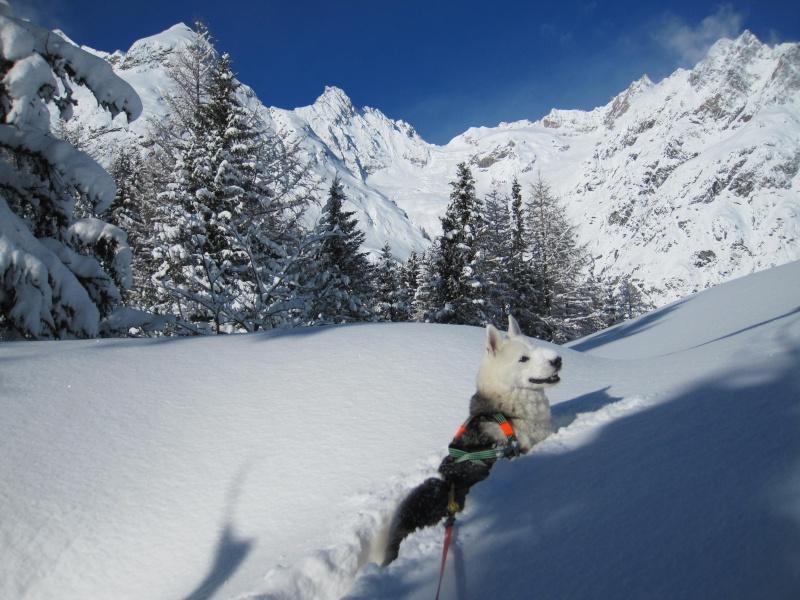 Nouvelles courses de Saskia dans la neige - Page 2 1010
