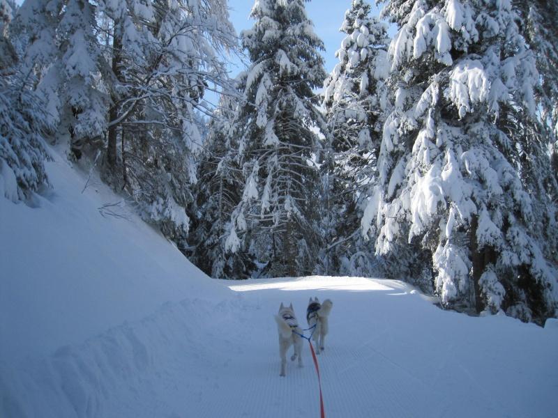 Ski-joering avec deux huskies 1012