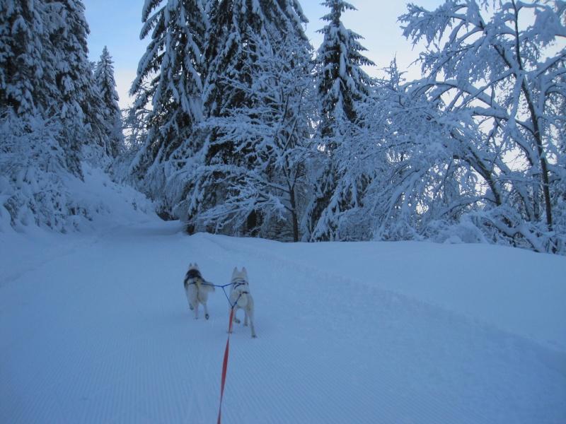 Ski-joering avec deux huskies 1110