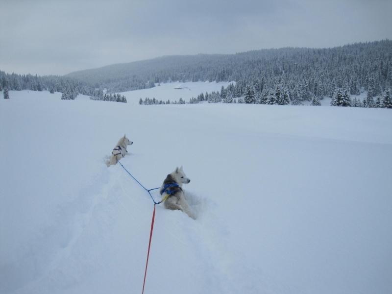 Ski-joering avec deux huskies 114