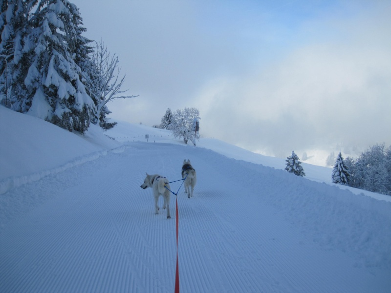 Ski-joering avec deux huskies 1212