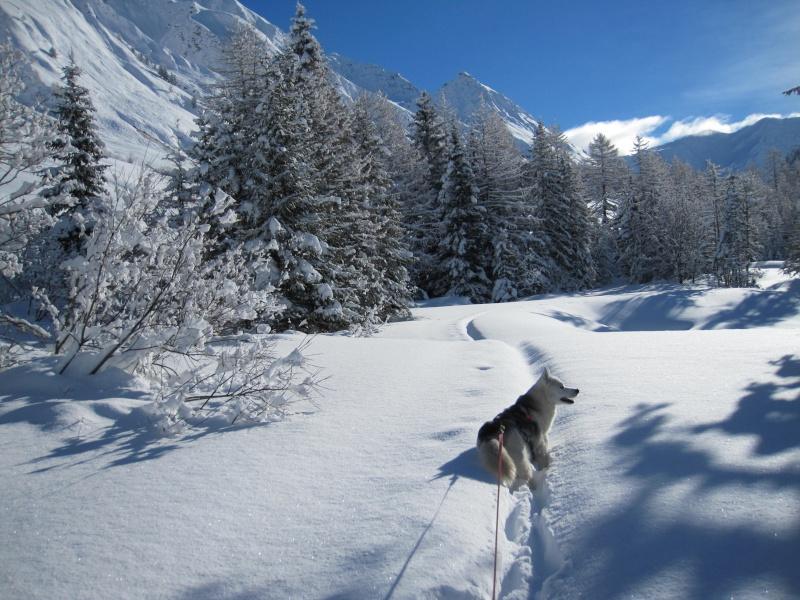 Nouvelles courses de Saskia dans la neige - Page 2 1310