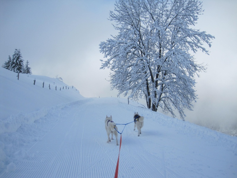 Ski-joering avec deux huskies 1311