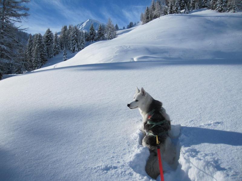 Nouvelles courses de Saskia dans la neige - Page 2 1410