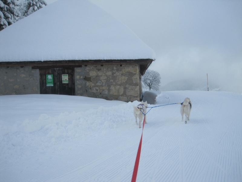 Ski-joering avec deux huskies 1411
