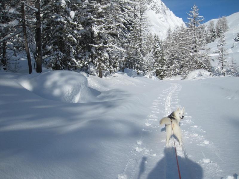 Nouvelles courses de Saskia dans la neige - Page 2 1510