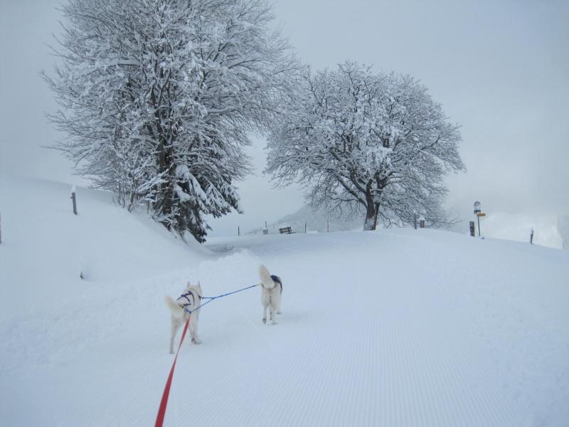 Ski-joering avec deux huskies 1511
