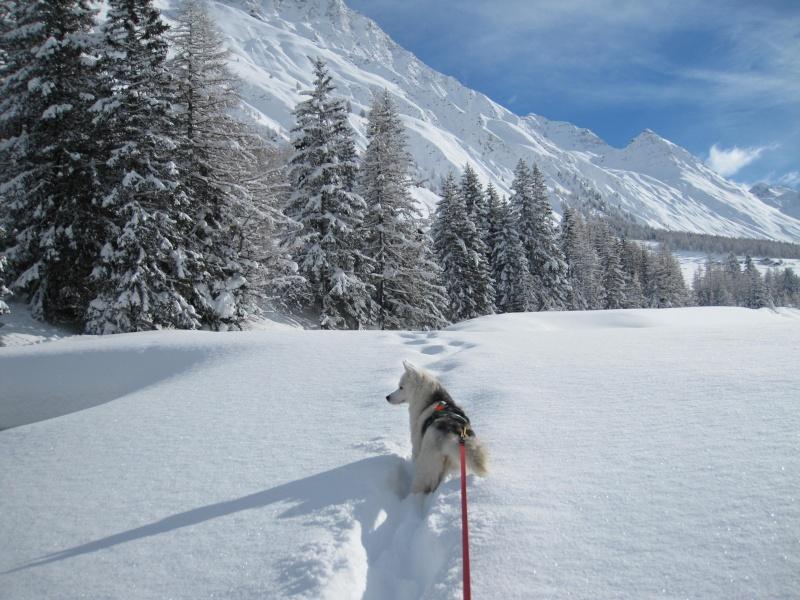 Nouvelles courses de Saskia dans la neige - Page 2 1610