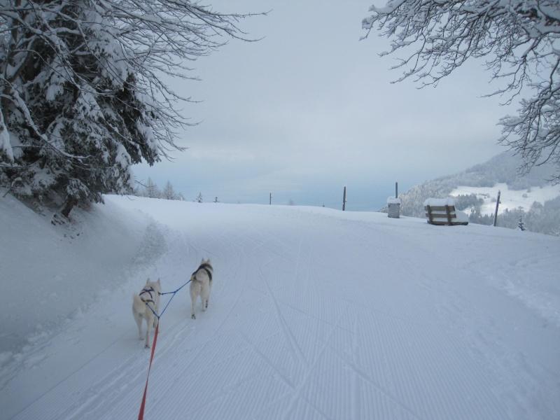 Ski-joering avec deux huskies 1611