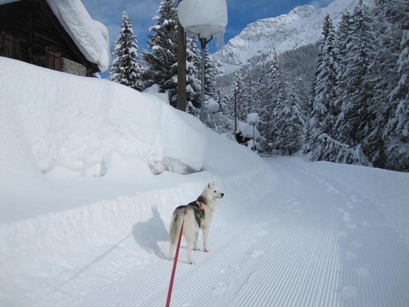 Nouvelles courses de Saskia dans la neige - Page 2 1710