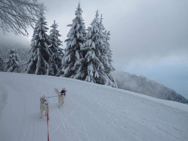 Ski-joering avec deux huskies 1711