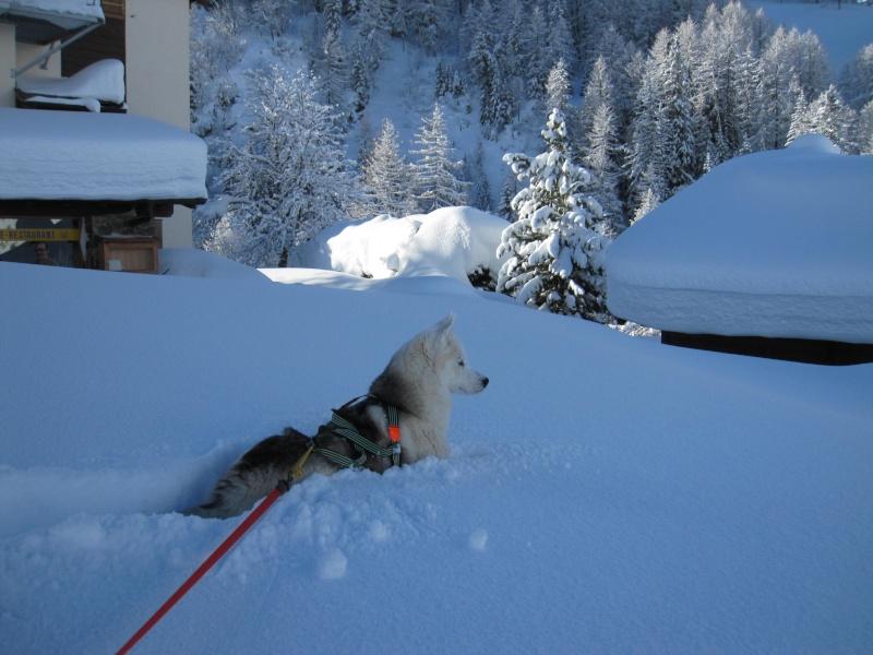 Nouvelles courses de Saskia dans la neige - Page 2 210