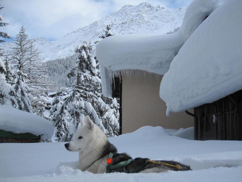 Nouvelles courses de Saskia dans la neige - Page 2 2110