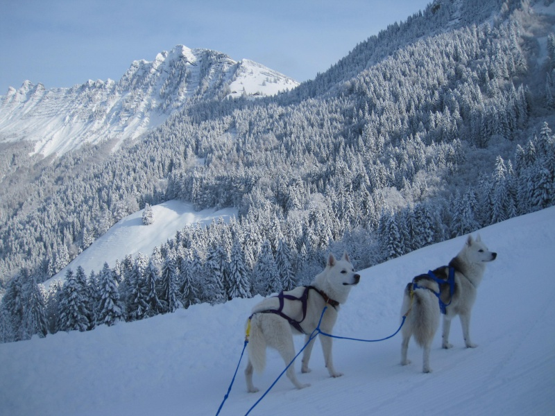 Ski-joering avec deux huskies 212