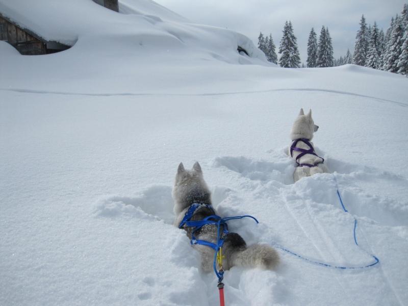 Ski-joering avec deux huskies 214