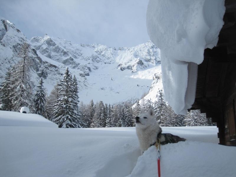 Nouvelles courses de Saskia dans la neige - Page 2 2310