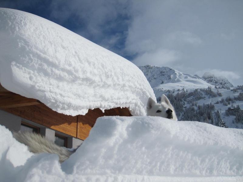 Nouvelles courses de Saskia dans la neige - Page 2 2410