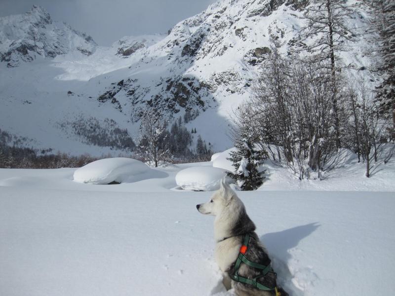 Nouvelles courses de Saskia dans la neige - Page 2 2510
