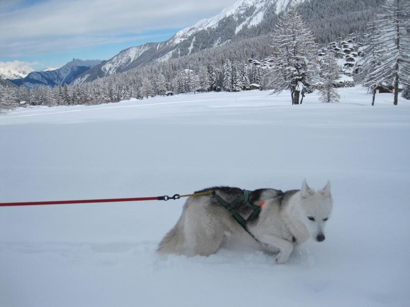 Nouvelles courses de Saskia dans la neige - Page 2 2710