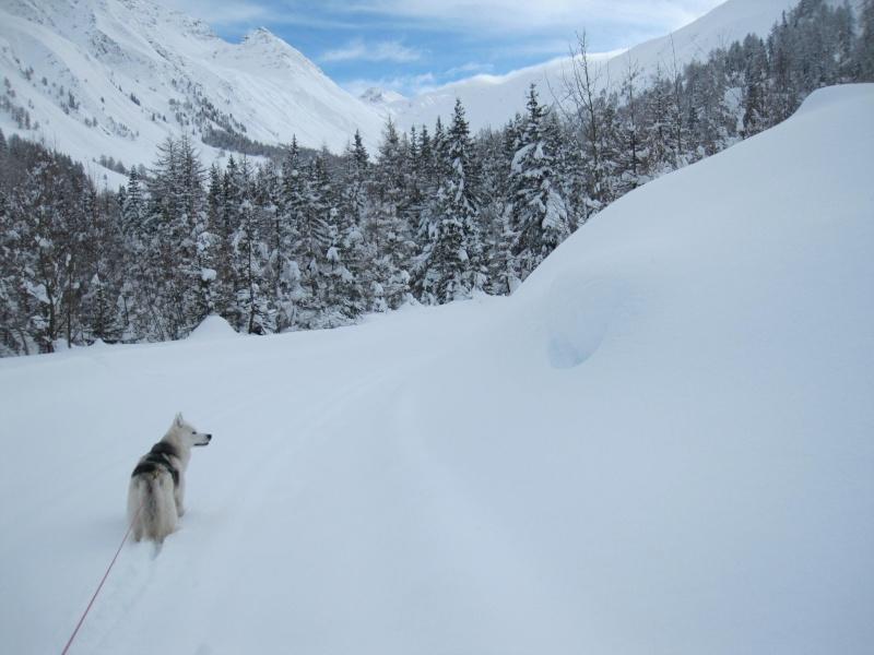 Nouvelles courses de Saskia dans la neige - Page 2 2810