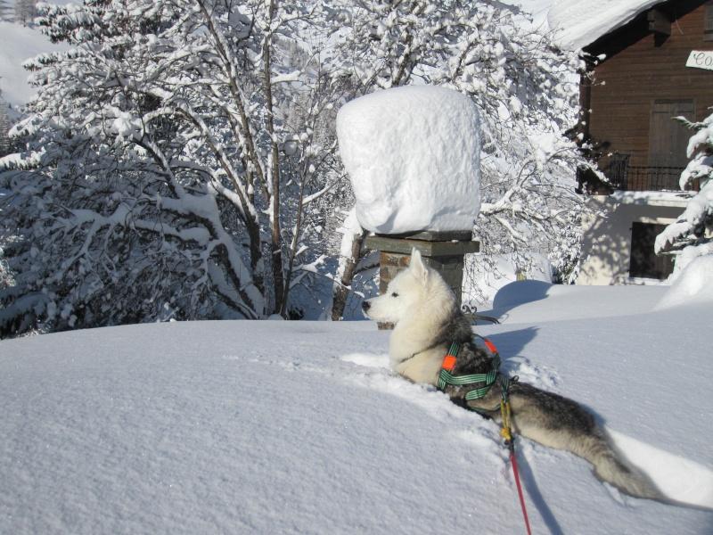 Nouvelles courses de Saskia dans la neige - Page 2 310