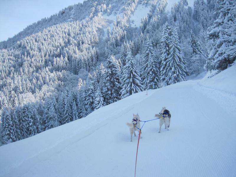 Ski-joering avec deux huskies 312