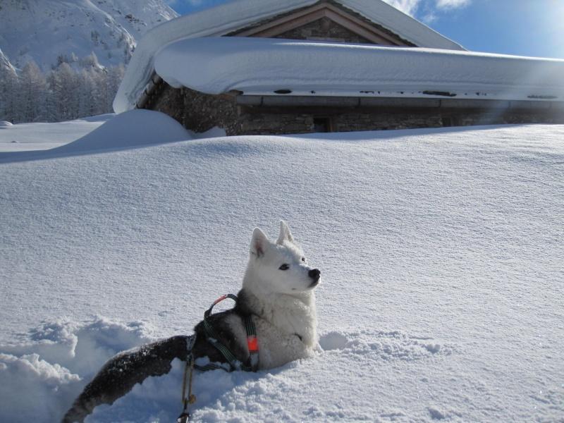 Nouvelles courses de Saskia dans la neige - Page 2 410