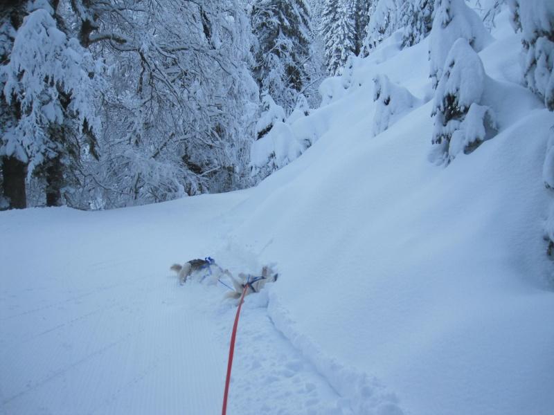 Ski-joering avec deux huskies 412