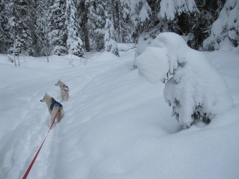 Ski-joering avec deux huskies 414