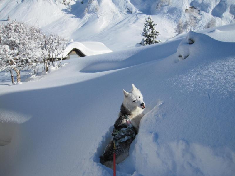 Nouvelles courses de Saskia dans la neige - Page 2 510
