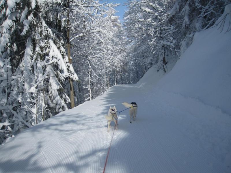 Ski-joering avec deux huskies 512