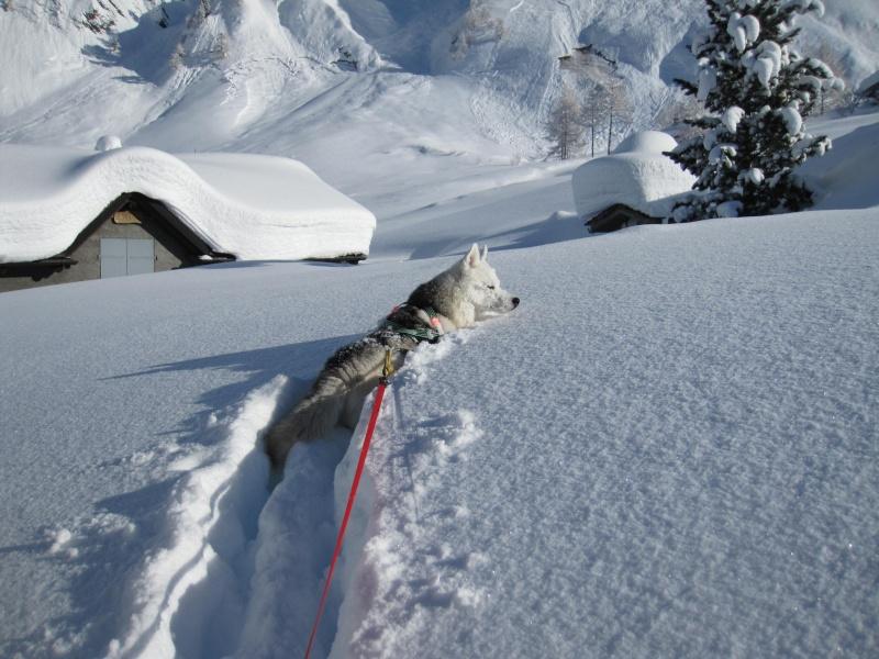 Nouvelles courses de Saskia dans la neige - Page 2 610