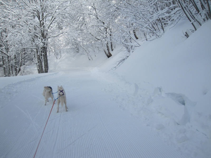 Ski-joering avec deux huskies 612