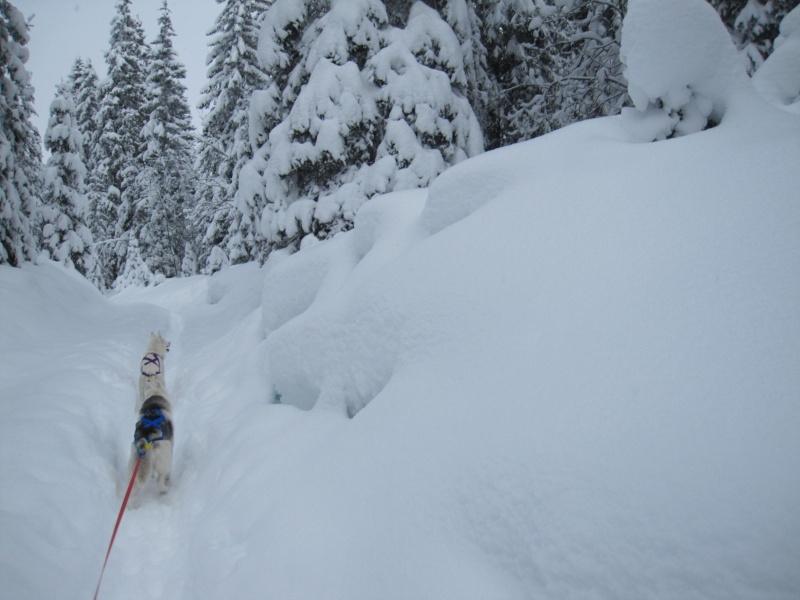 Ski-joering avec deux huskies 613