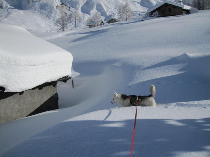 Nouvelles courses de Saskia dans la neige - Page 2 710