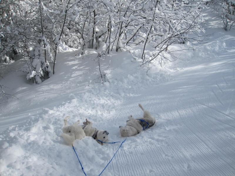 Ski-joering avec deux huskies 712