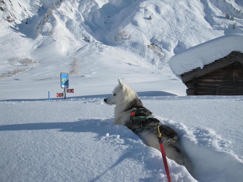 Nouvelles courses de Saskia dans la neige - Page 2 810