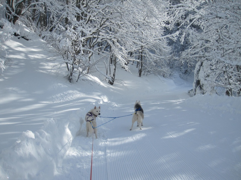 Ski-joering avec deux huskies 813