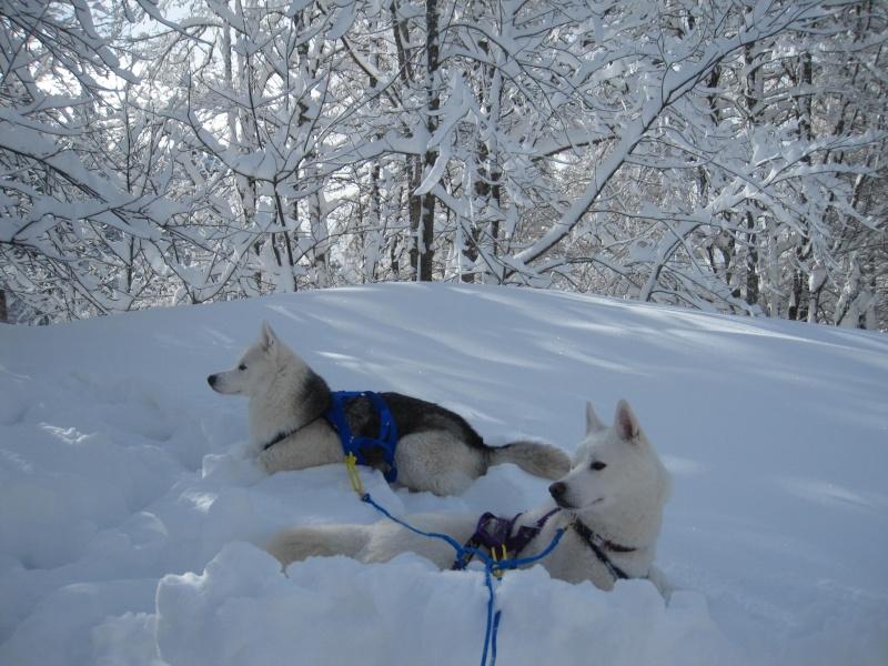 Ski-joering avec deux huskies 913