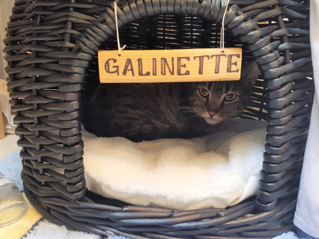 GALINETTE (tabby) - Page 3 20190511