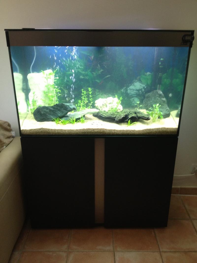 présentation  de mon aquarium  Img_0011