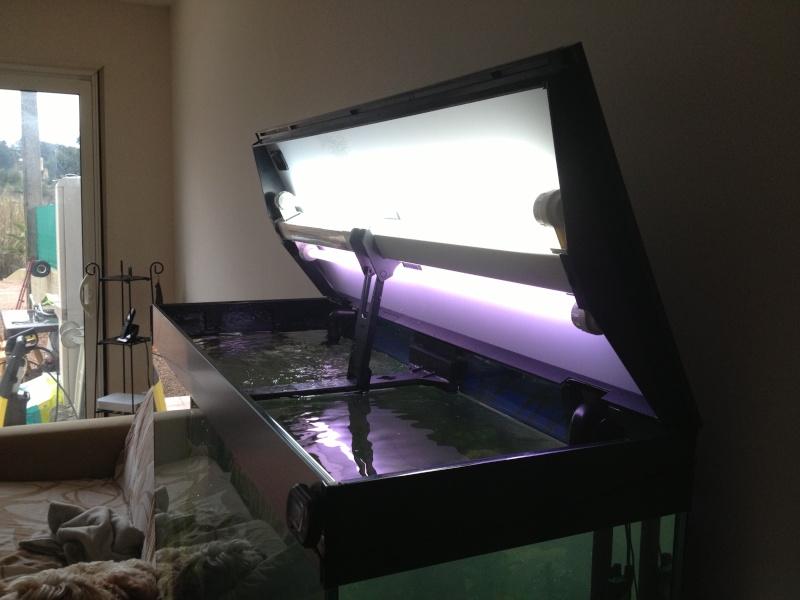 présentation  de mon aquarium  Img_0012