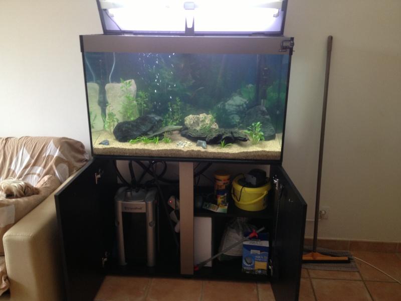 présentation  de mon aquarium  Img_0013